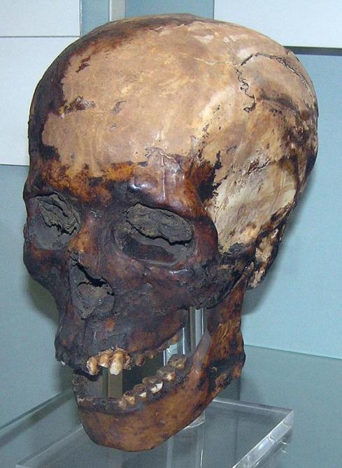Meryrahashtef kranium